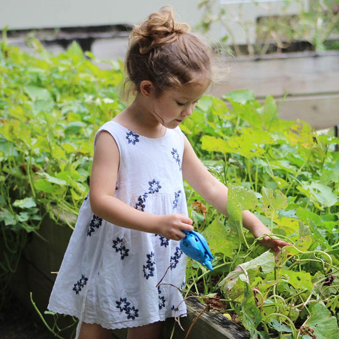 Pé na Horta - Oficina de Agroecologia para Crianças  Fábrica de Hortas