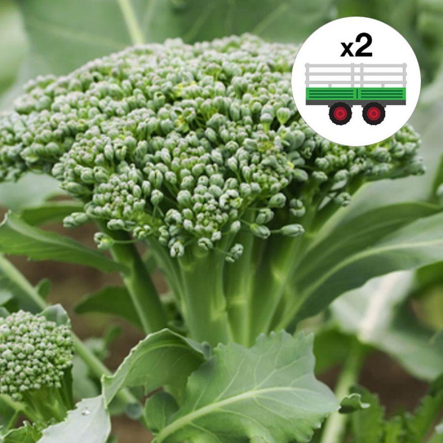 Brócolis Família Freitas - 2un