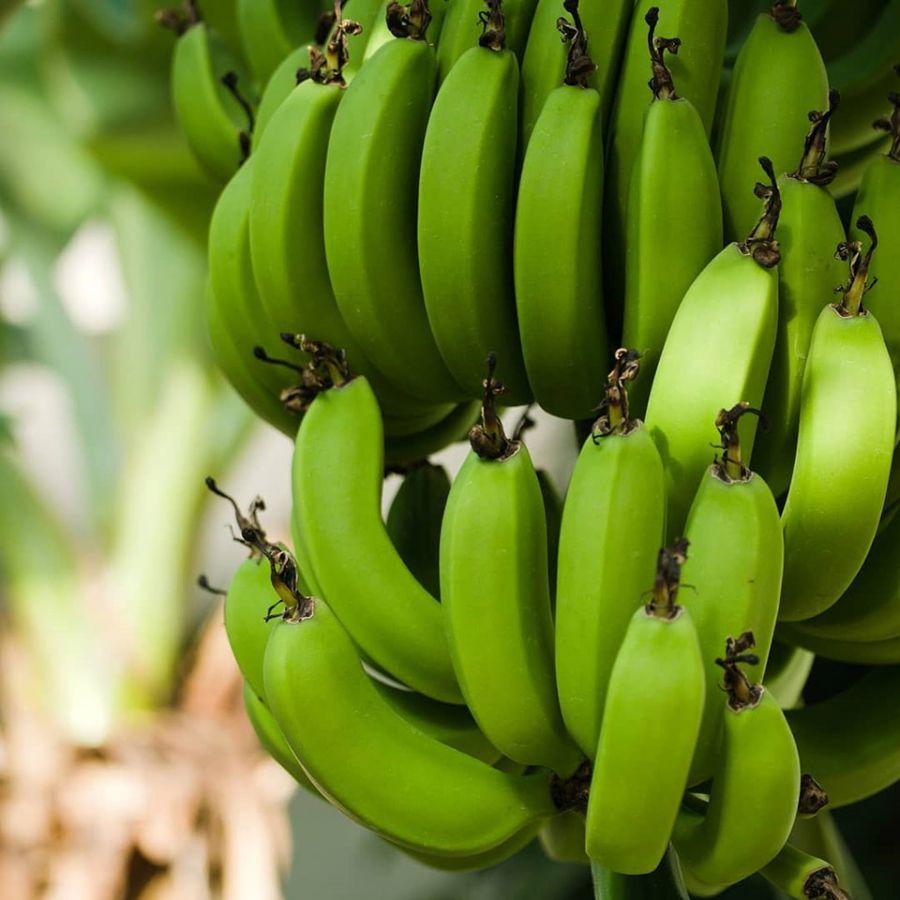 Banana Nanica Verde EcosAgro - 1k