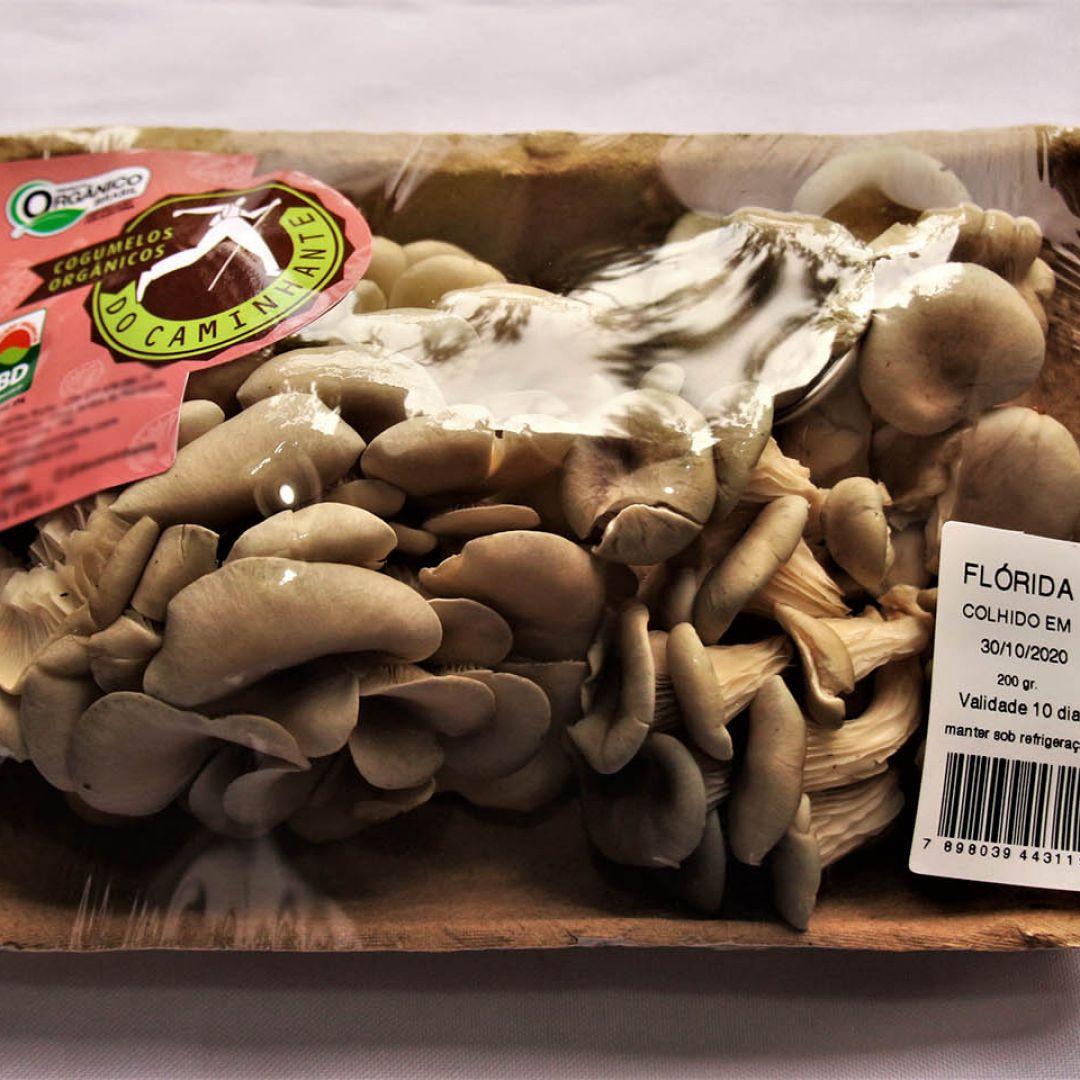 Cogumelos Shimeji Flórida Orgânico Docaminhante - 500 g