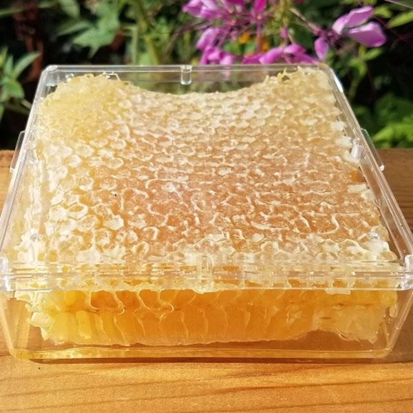 Favo de mel in box Fazenda Sapucaia