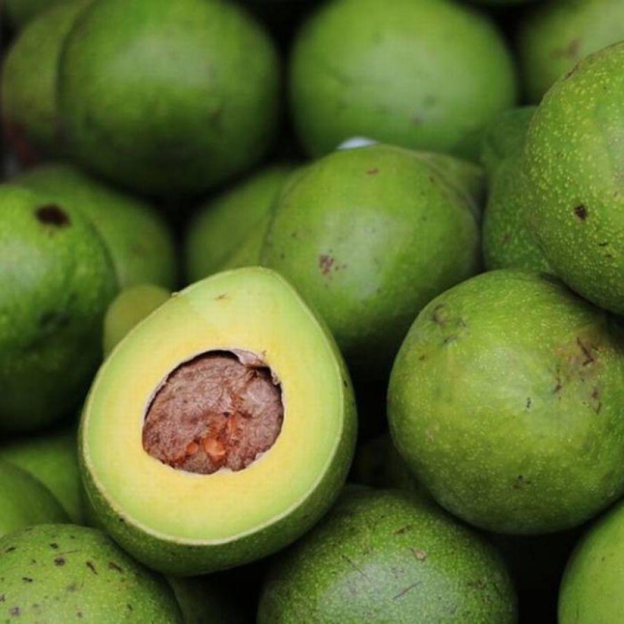 Abacate Fazenda Sapucaia - 10kg