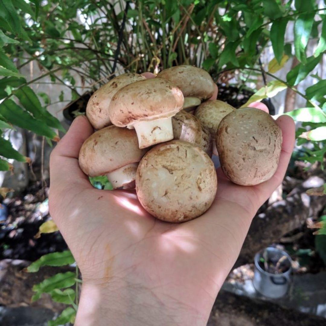 Cogumelo Portobello Casa dos Fungos - 1kg