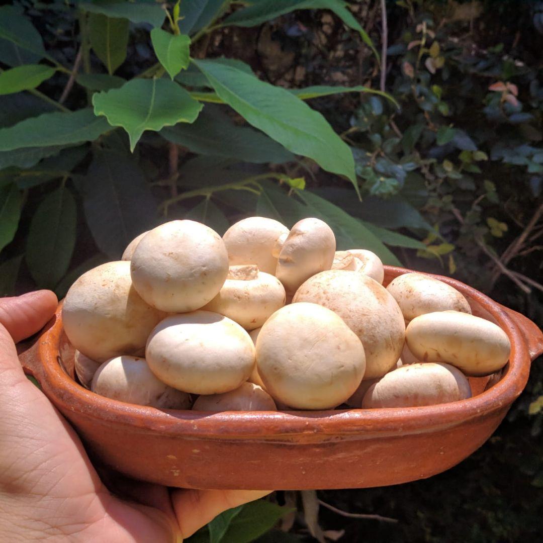 Cogumelo Paris Casa dos Fungos - 1kg
